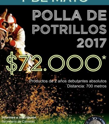 Polla de Potrillo 2017